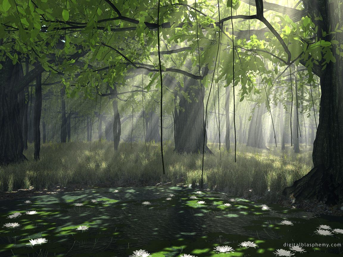 Pretty Swamp 2