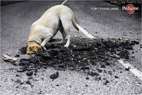 Pedigree - for strong dogs